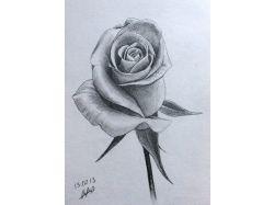 Картинки розы карандашом 7