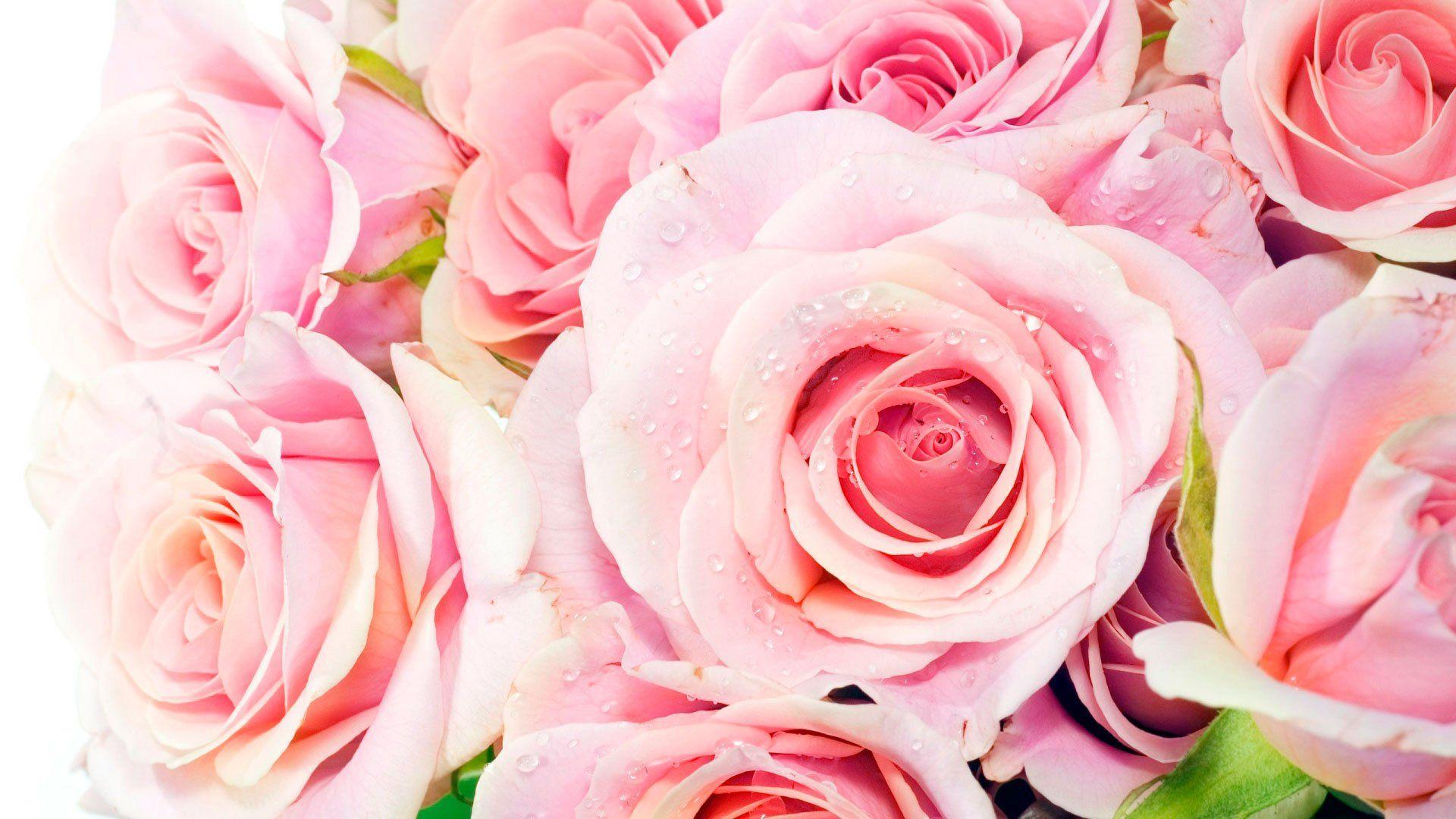 обои для раб стола розовые розы № 583777 бесплатно