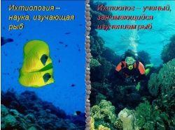 Наука изучающая подводный мир 7