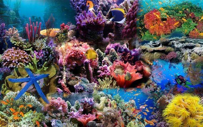 Обои на рабочем столе подводный мир
