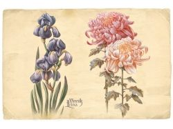 Цветы рисунок графика 7