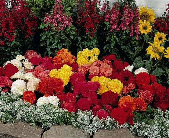 Многолетники цветы показать 199