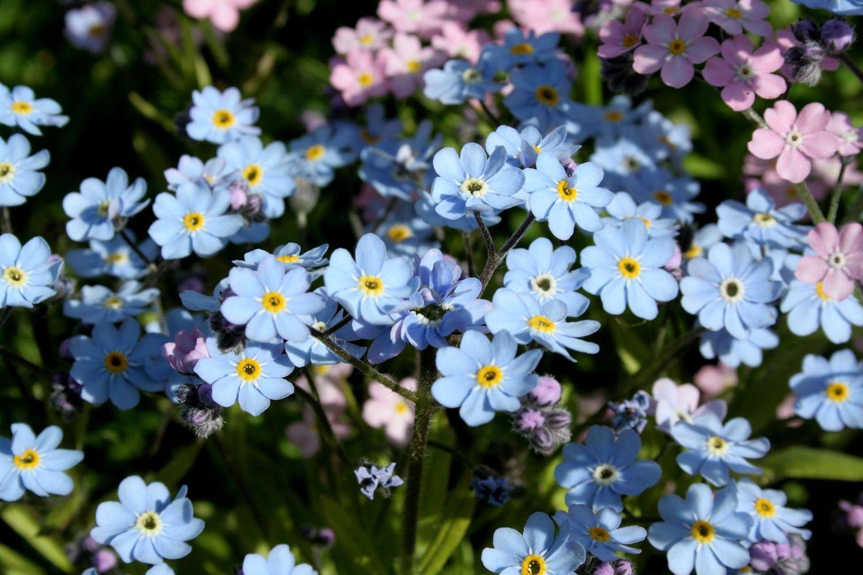 Чтобы скачать Многолетние цветы фото ...: prikolnye-kartinki.ru/priroda/1751-Mnogoletnie_tsvete_foto.html
