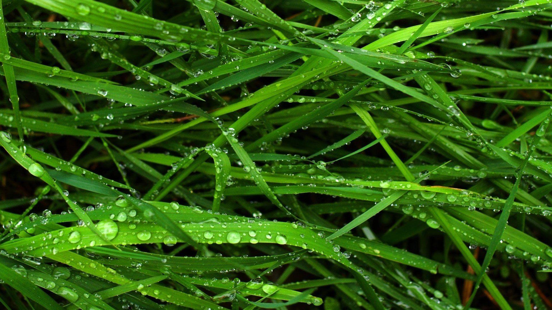 Зеленая, летняя трава  № 1074216 бесплатно