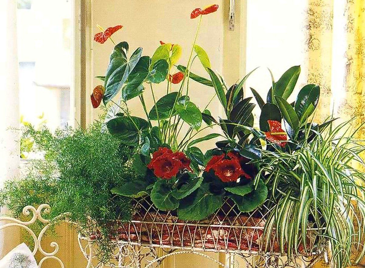 Магия домашних цветов фото