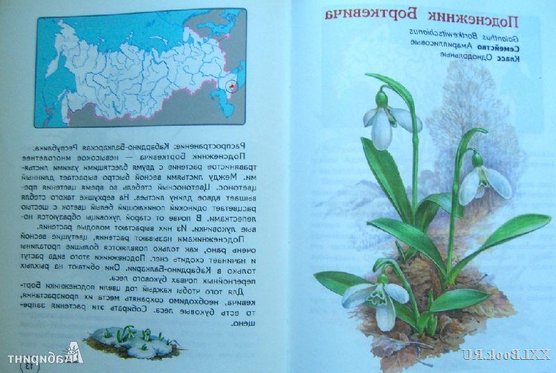 Составить План Рассказа О Редком Растении