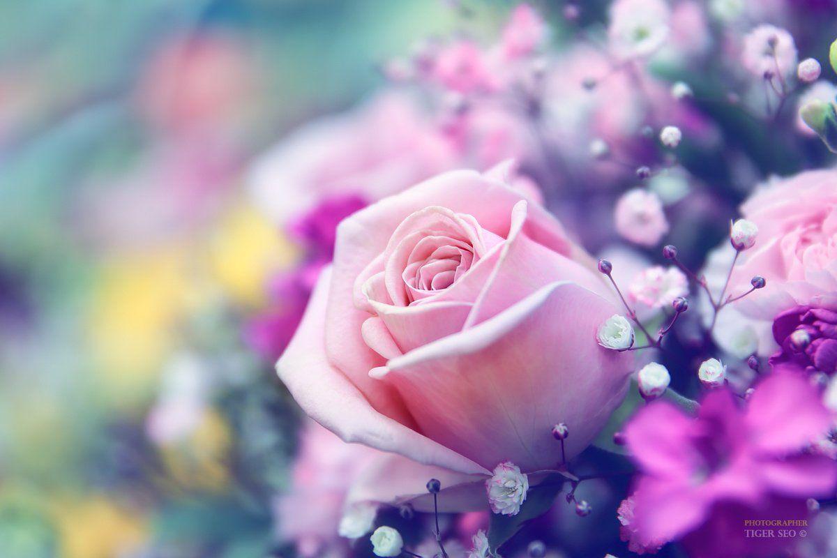 Фото розы и другие цветы
