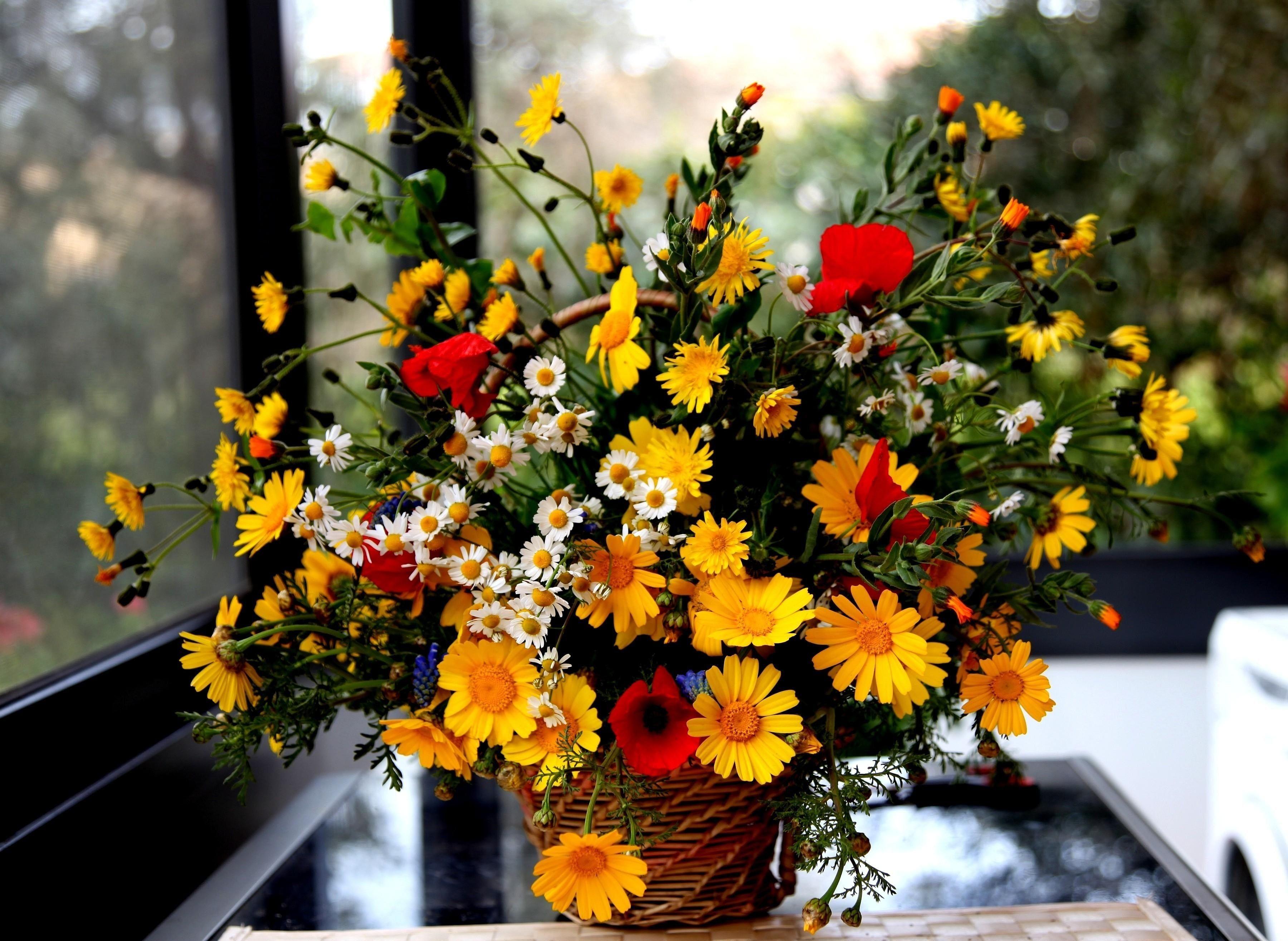 обои на рабочий стол осенние цветы композиции из цветов № 241416 бесплатно