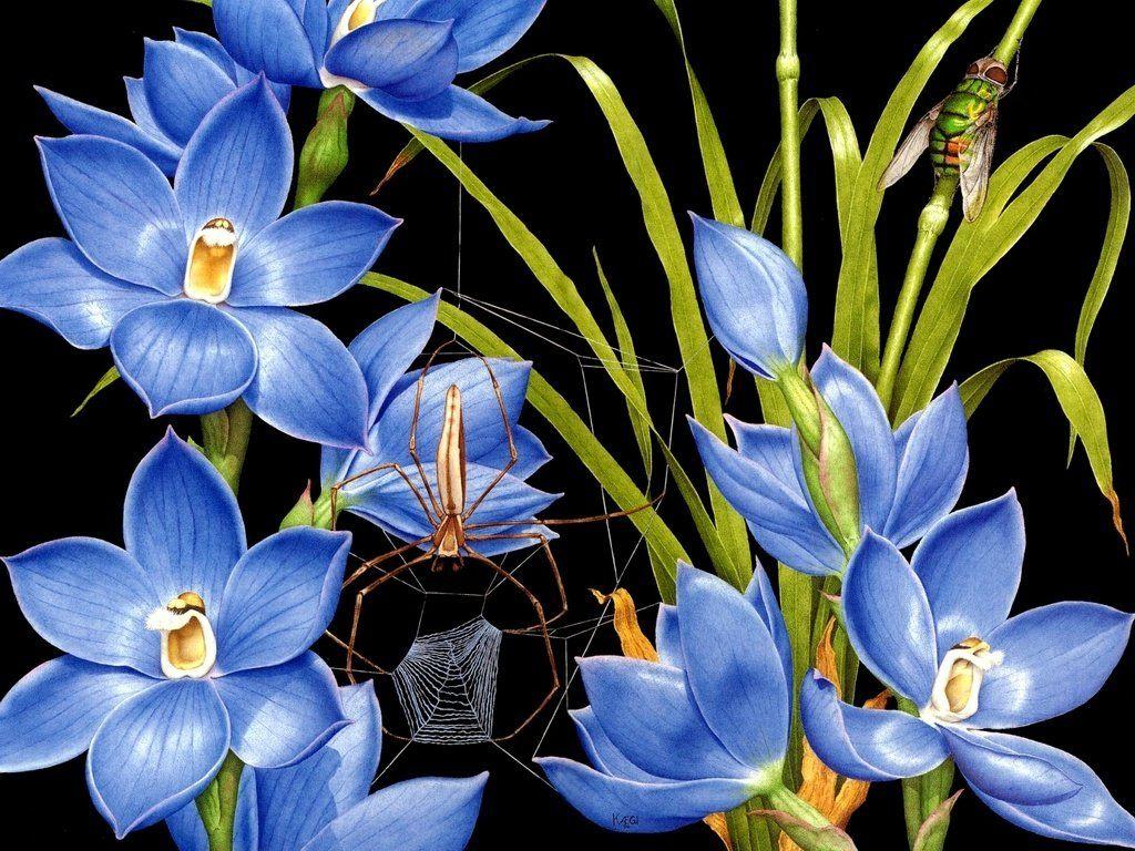 Очень красивые рисунки в стиле фэнтези 29 Фото