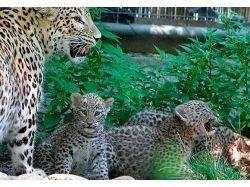 Окружающей мир животных 9