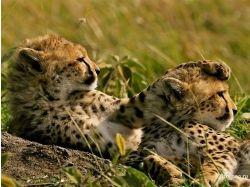 Африканские животные картинки 9