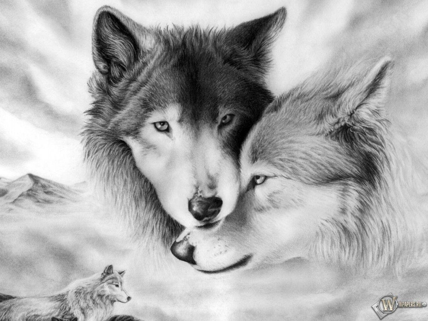 Картинки волков красивые рисунок