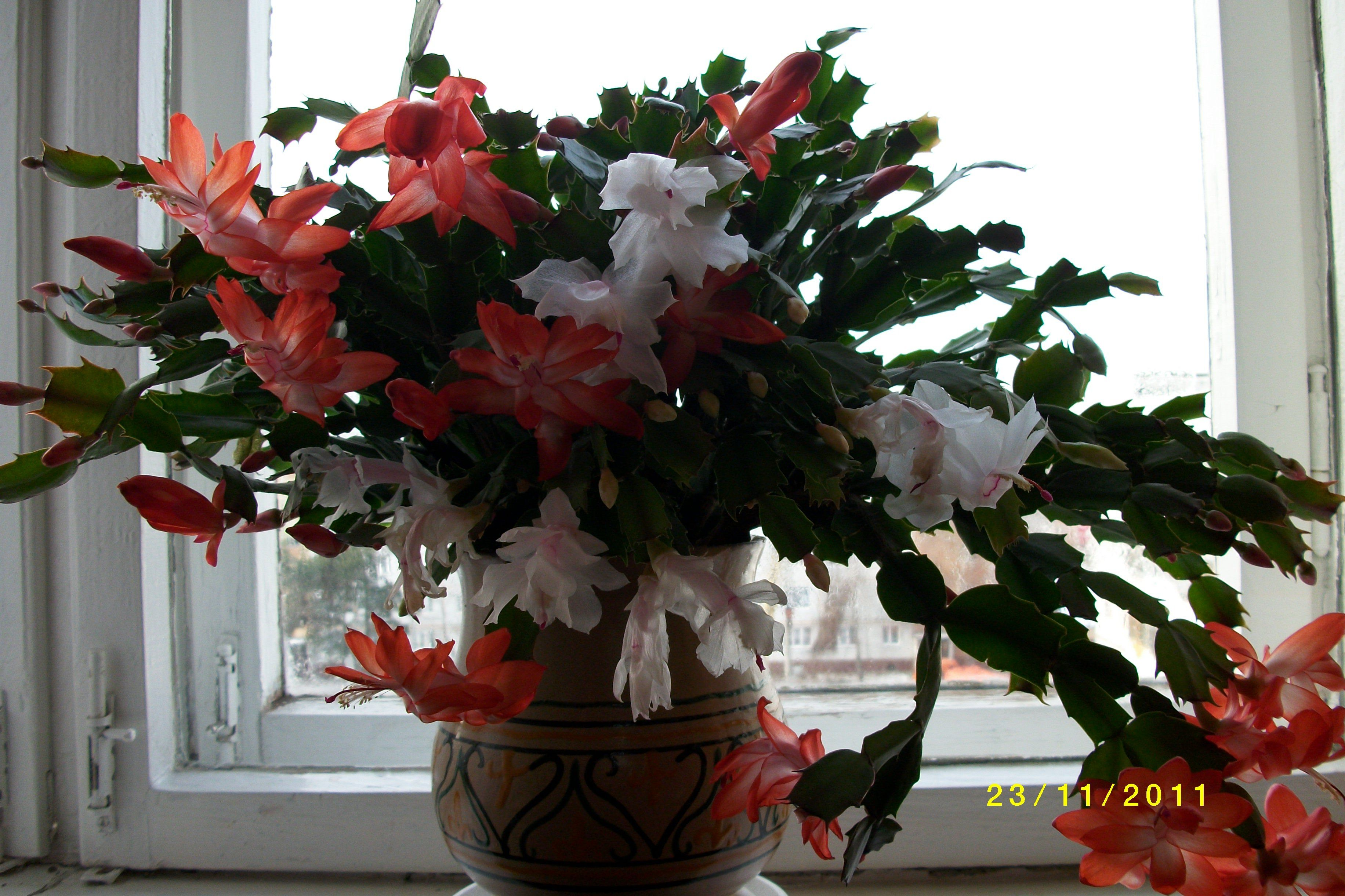 Комнатные не цветущие цветы цена 74