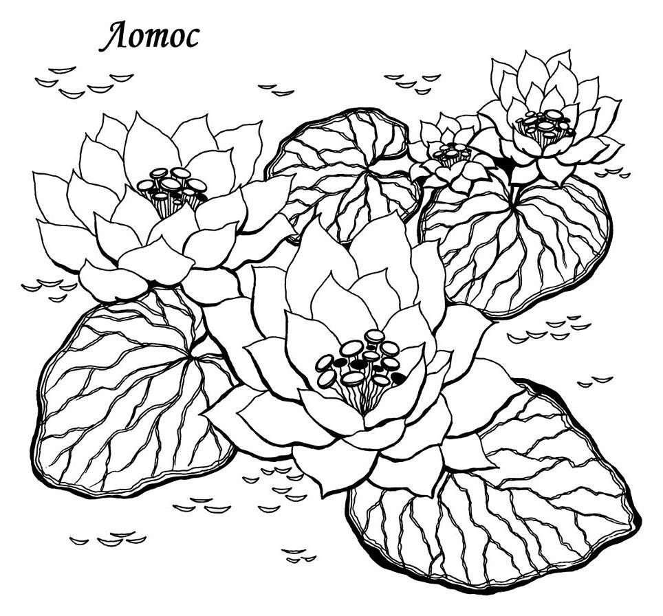 Раскраски природы и растений для малышей 12