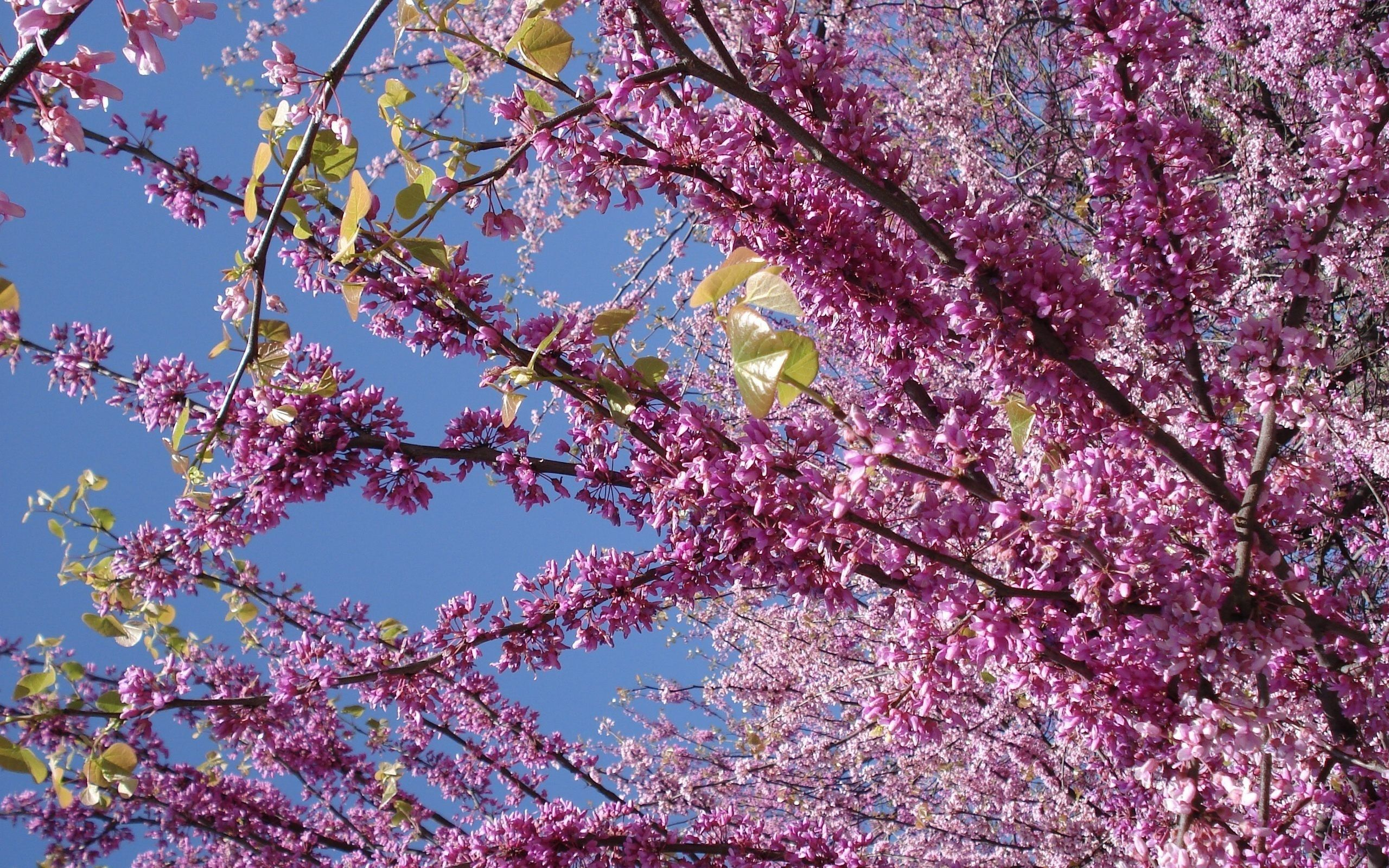 Цветы деревьев  и названия