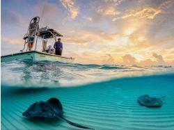 Подводный мир фото 9