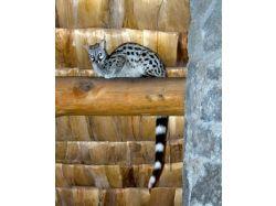 Картинки экзотических животных 9