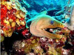 Подводный мир карибского моря 9