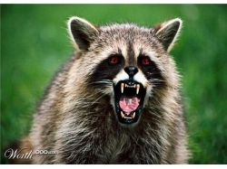 Страшные животные фото 9