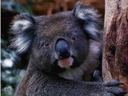 Картинки животных онлайн бесплатно 4