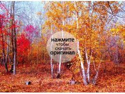 Осень лес фото