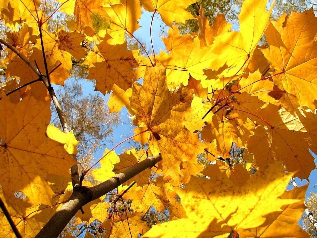 Осень фото скачать бесплатно » Скачать лучшие картинки ...
