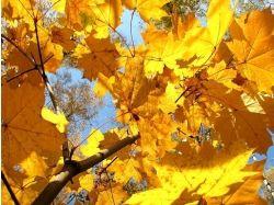 Осень фото скачать бесплатно