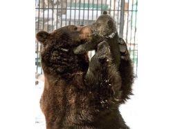 Прикольные фото медведей