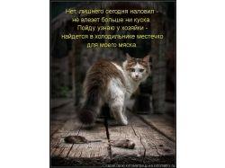 Картинки про котят смешные красивые и милые