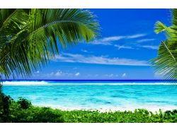 Красивые картинки пальмы море