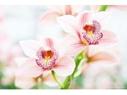 Обои на компьютер орхидеи
