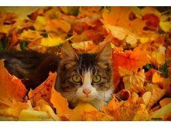 Животные осень фото