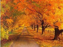 Красивые картинки осени скачать