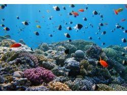 Красное море подводный мир видео