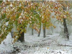 Картинки первый снег для детей
