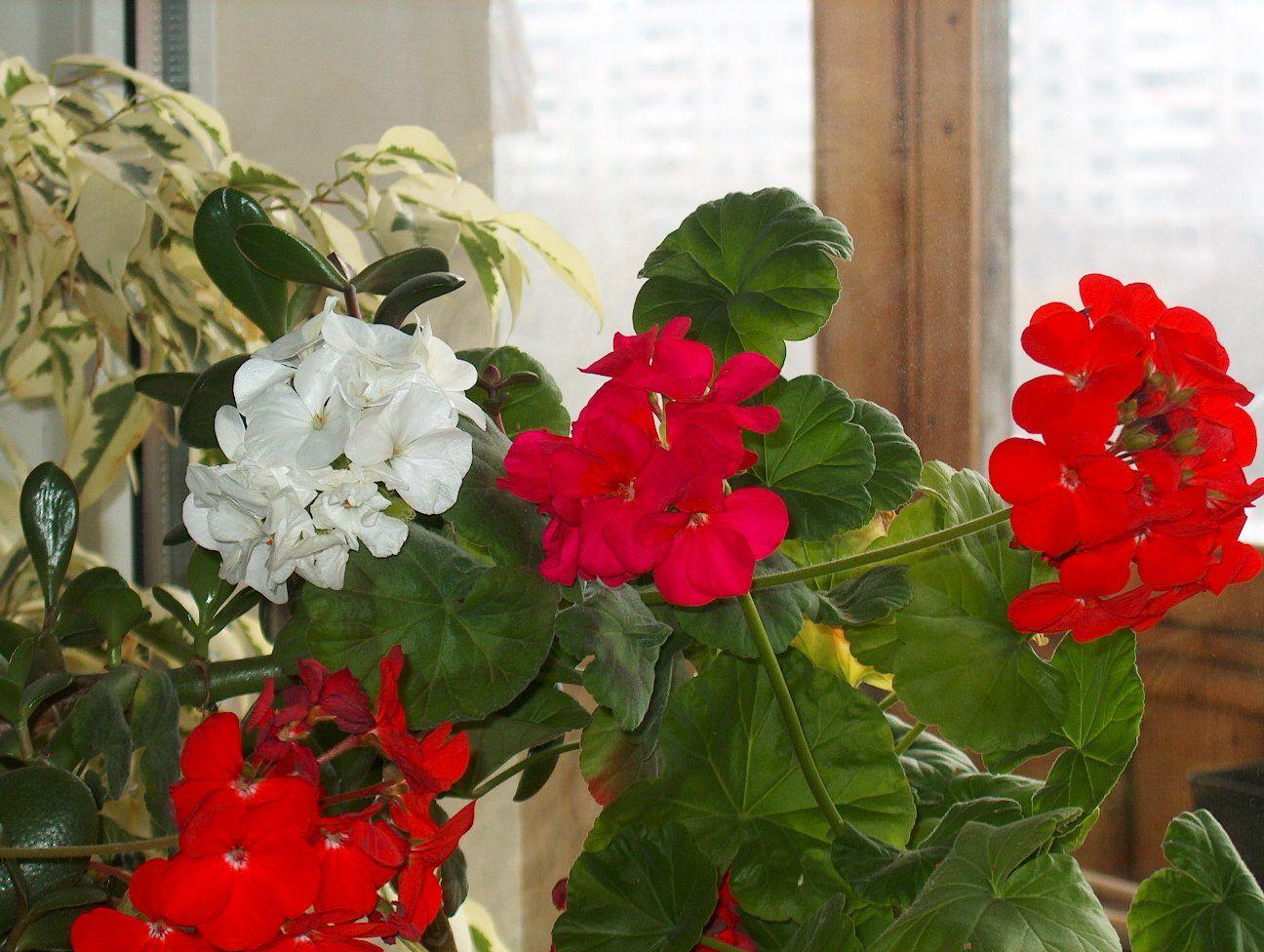 Комнатные цветы уход и выращивание с