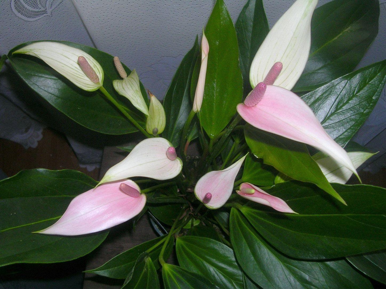 Посмотреть цветы домашние фото и названия