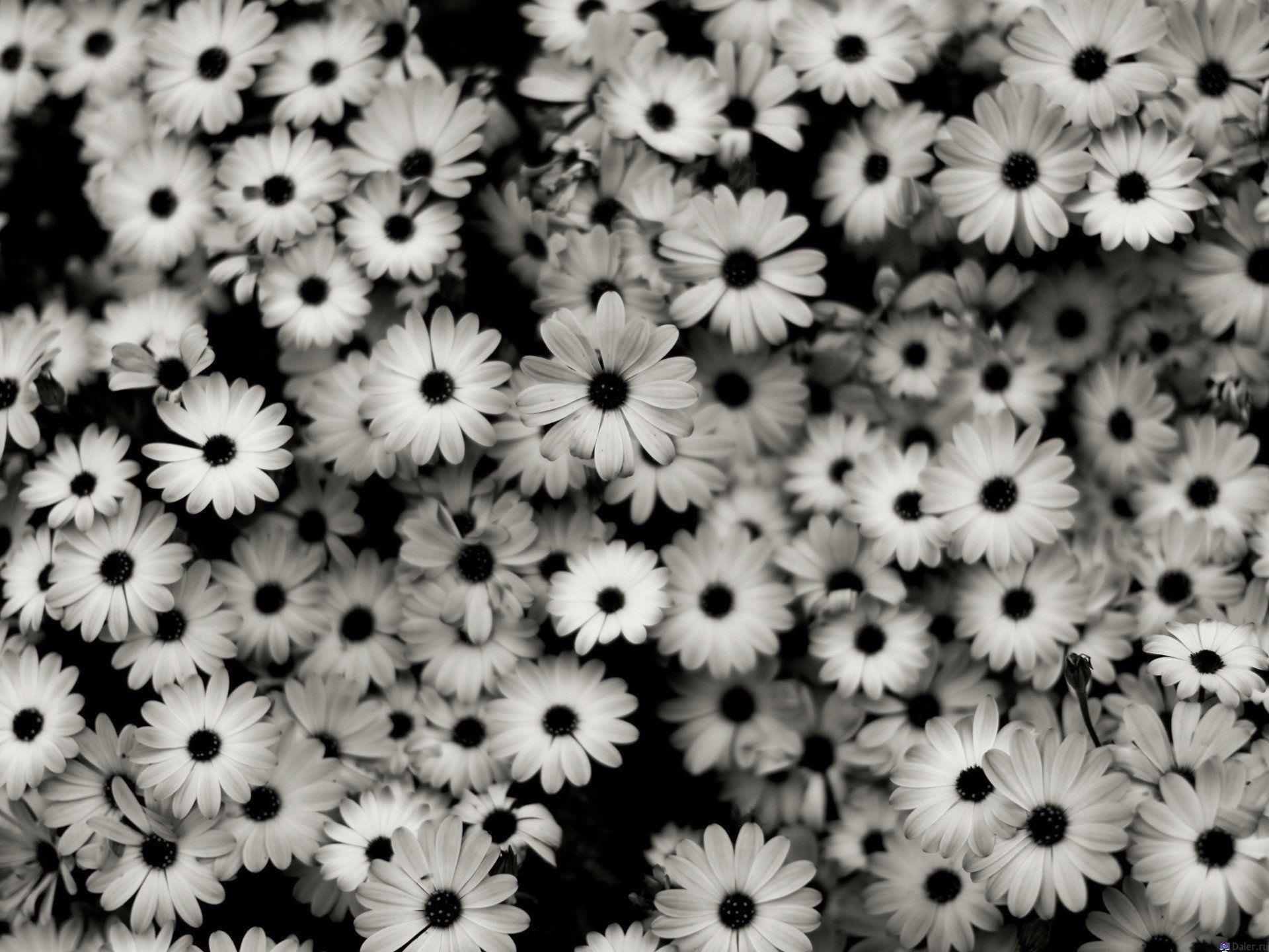 Фото цветов в чб