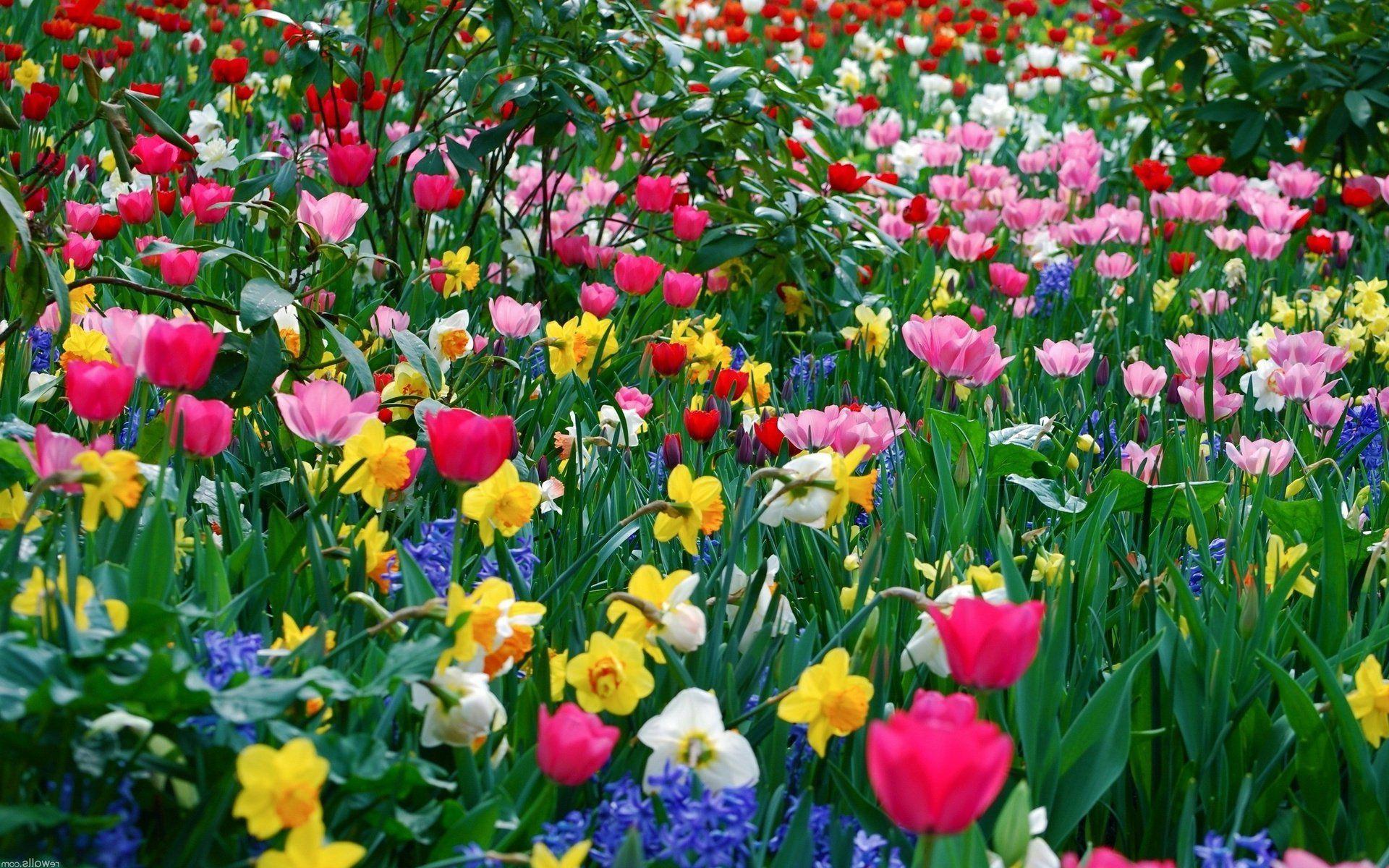 ТОП-7 самых красивых цветущих долин мира фото цветочных