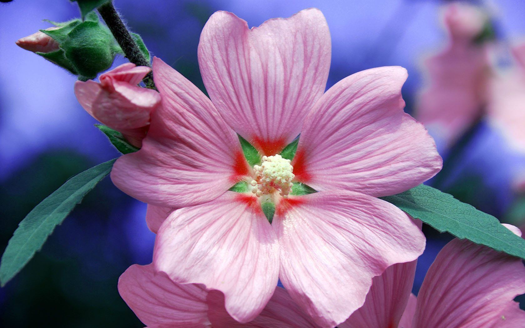 Фото цветка крупным планом