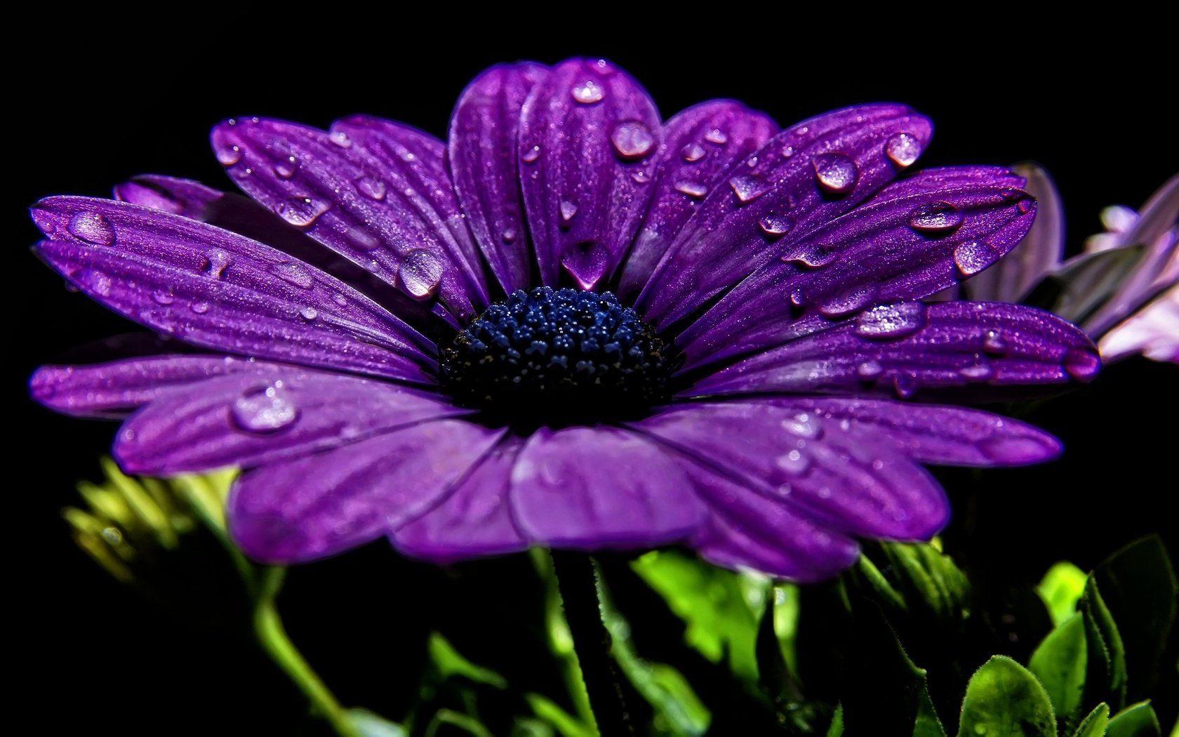 Сиреневого цвета цветы