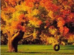 Картинки осень природа 5