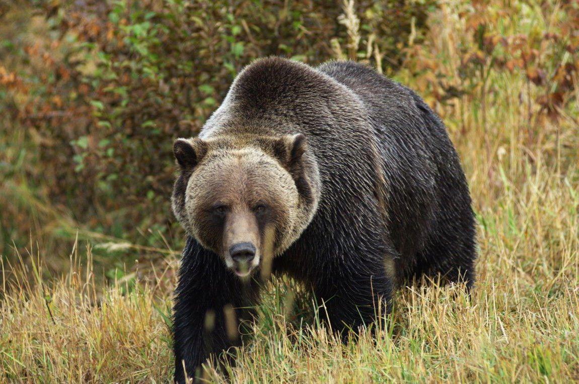 Картинки и карикатуры про медведей 57