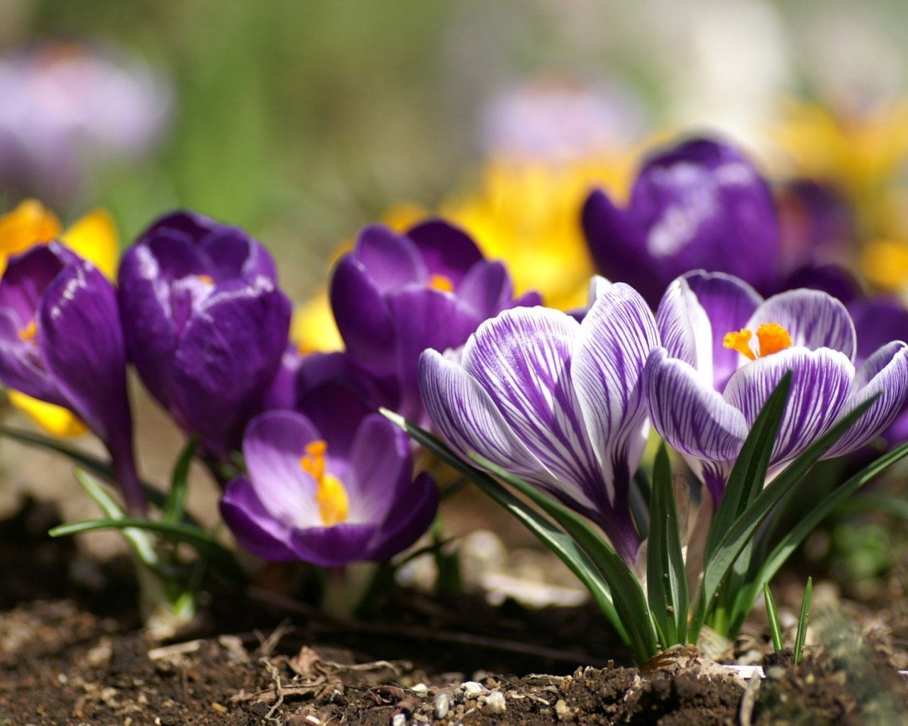 Фото дня весенние цветы