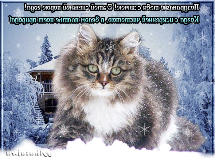 Прикольные картинки зима анимация