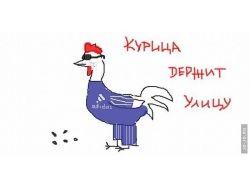 Курицы картинки 5