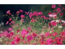 Мини картинки цветы 6
