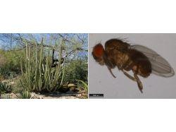 В кактусе насекомые фото 2