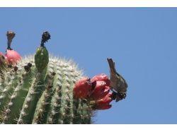 В кактусе насекомые фото 3