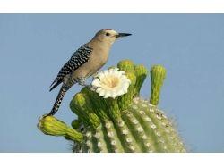 В кактусе насекомые фото 5